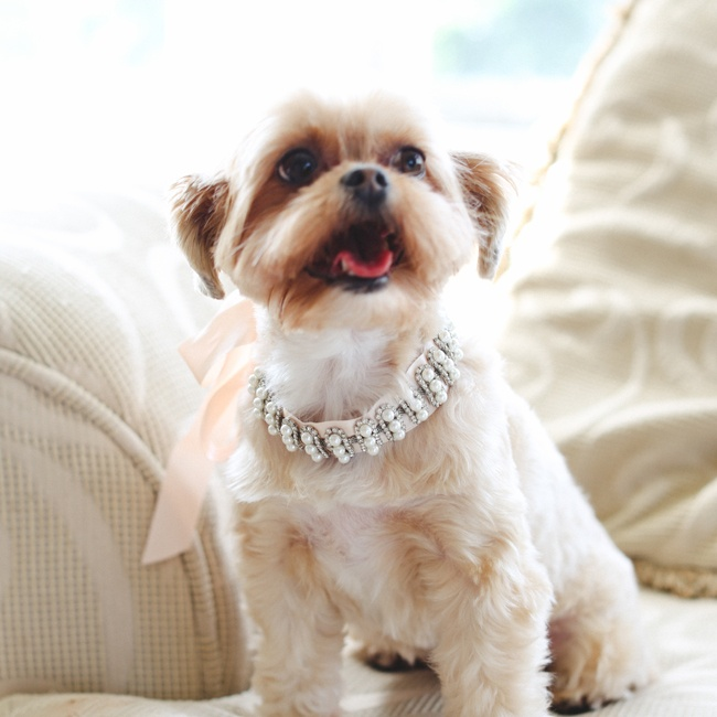 Paula and David's ring bearer was their little dog, Sofi. Paula and her maid of honor created a pretty collar for the pooch with pearls and crystals.