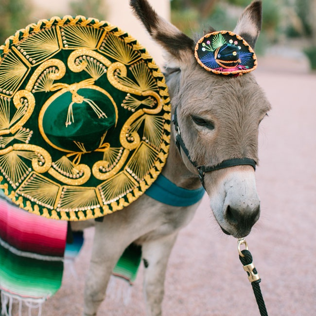 This sombrero-wearing donkey named Burrito dressed for the occasion in traditional Southwestern garb and handed out cold beer to guests.