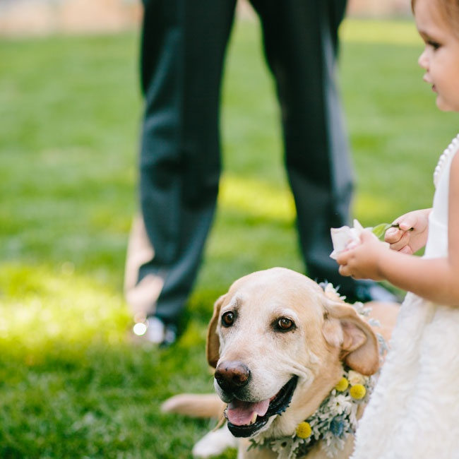 The couple's dog walked down the aisle with the flower girls and ring bearers wearing a floral color made from dusty miller, daisies and billy balls.