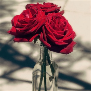 Red Rose Decor