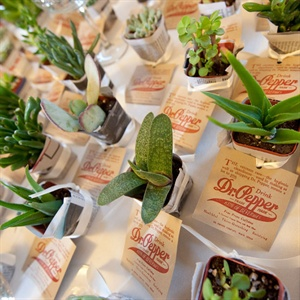 Green Succulent Favors