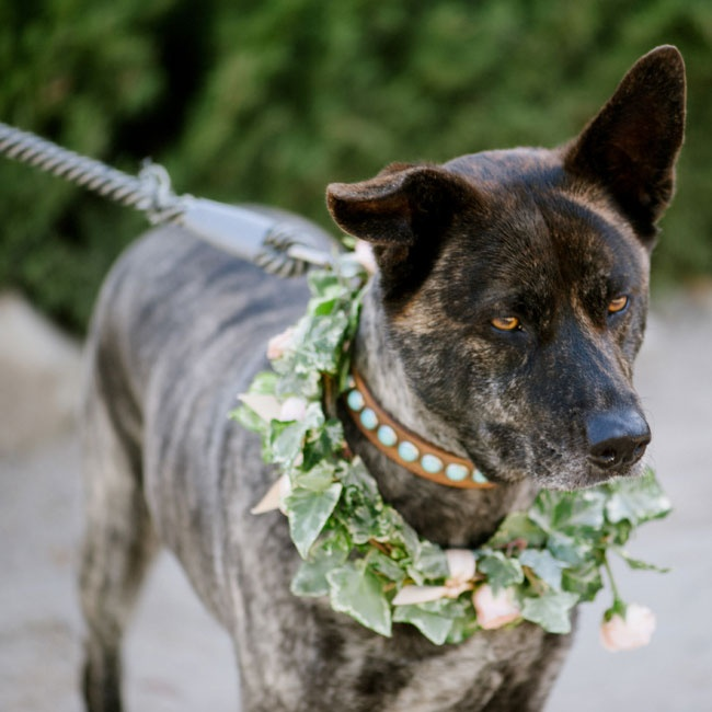 The couple's dog, Heidi, accompanied the flower girl down the aisle wearing an ivy and pink rose color.
