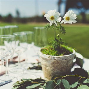 Potted Daisy Centerpieces