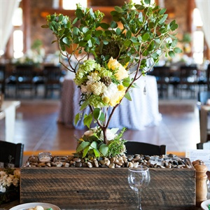 Planted Tree Centerpieces