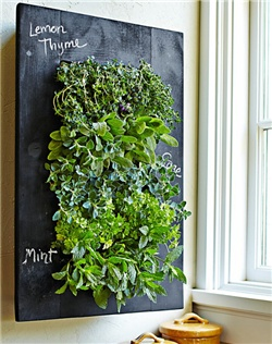 Bring your wall to life with a stunning vertical herb garden. This planter mounts securely to the wall and offers a unique, space-saving way to harvest fresh herbs while adding lush greenery to your kitchen or an outdoor area. Just fill the cells with the herb of your choice, and water as needed through the top irrigator; the hidden collector tray catches excess runoff.